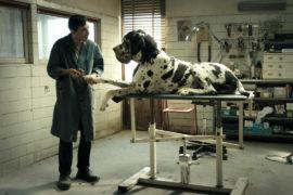 dogman CinemaTown.it