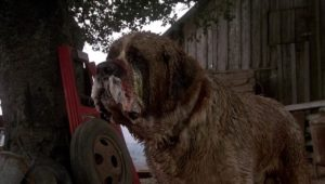 cujo stephen king cinematown.it