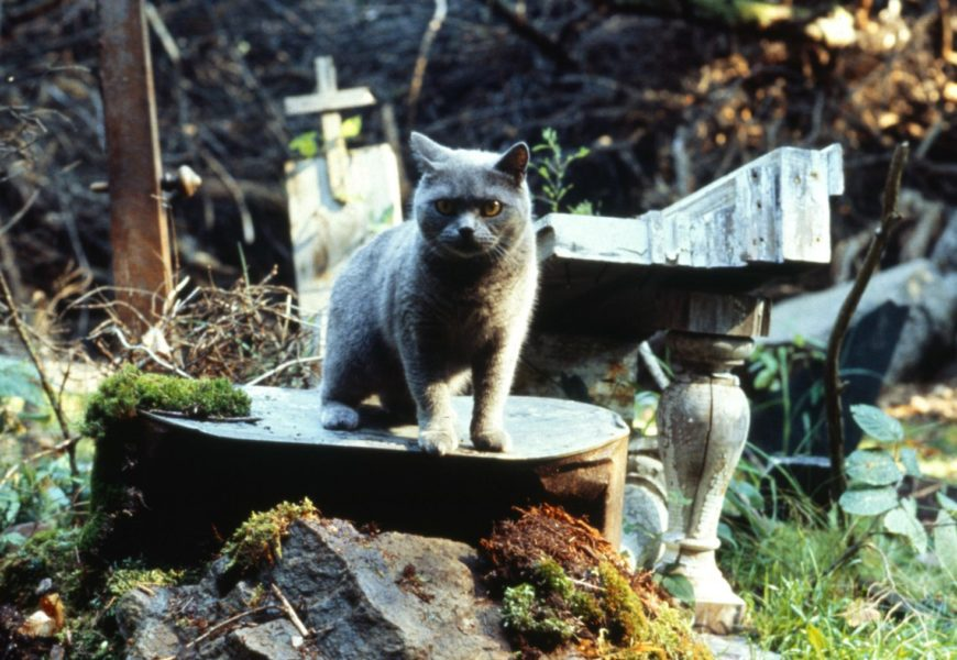Pet Sematary CinemaTown.it